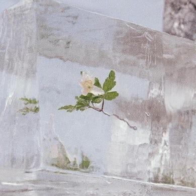 Windflowers (Clear Vinyl) Vinyl Record