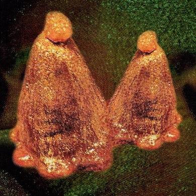 Oocyte Oil & Stolen Androgens Vinyl Record