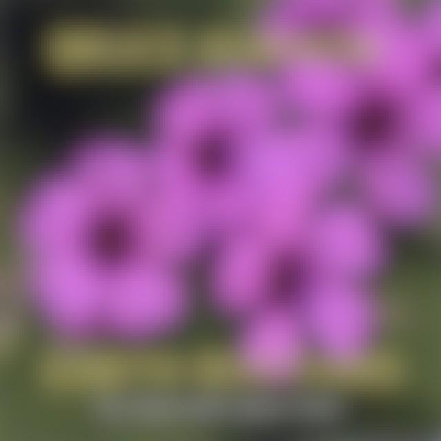 Bruce Kurnow EARTH RHYTHMS CD