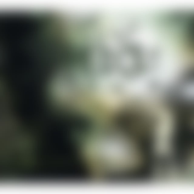 Pareidol VAGUE LYRICAL APPARITION CD