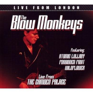 BLOW MONKEYS LIVE FROM LONDON CD