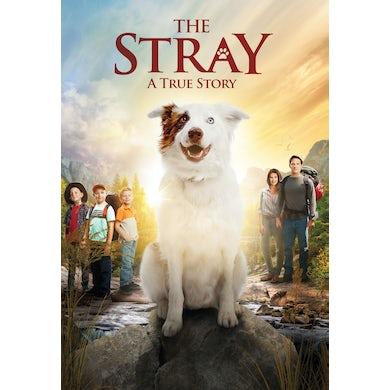 STRAY DVD