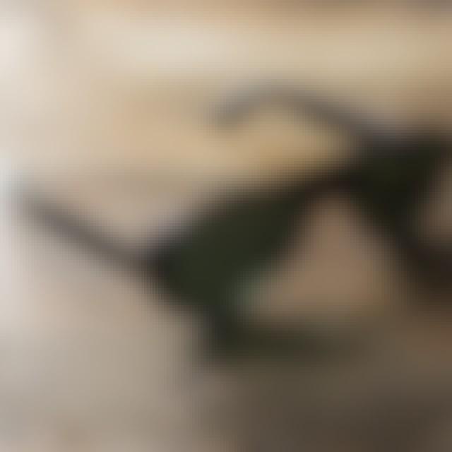 Bruce Lee Signature OTE Surfer Sunglasses