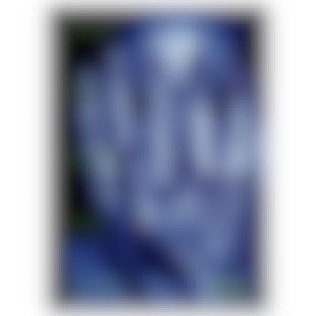 Steve Vai Alien Love Secrets DVD
